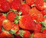 Strawberries, a spring favorite in Tennessee